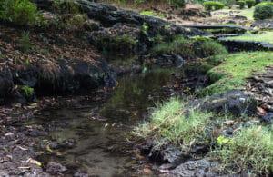Creek at Liliuokalani Park in Hilo