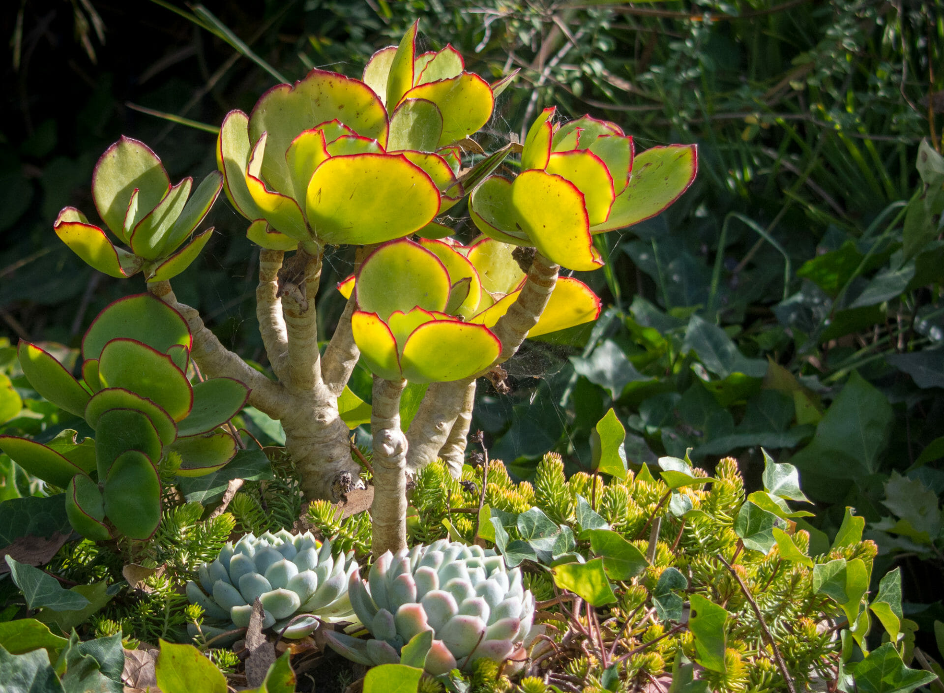 Photo post – succulents at Monarch Cove Inn