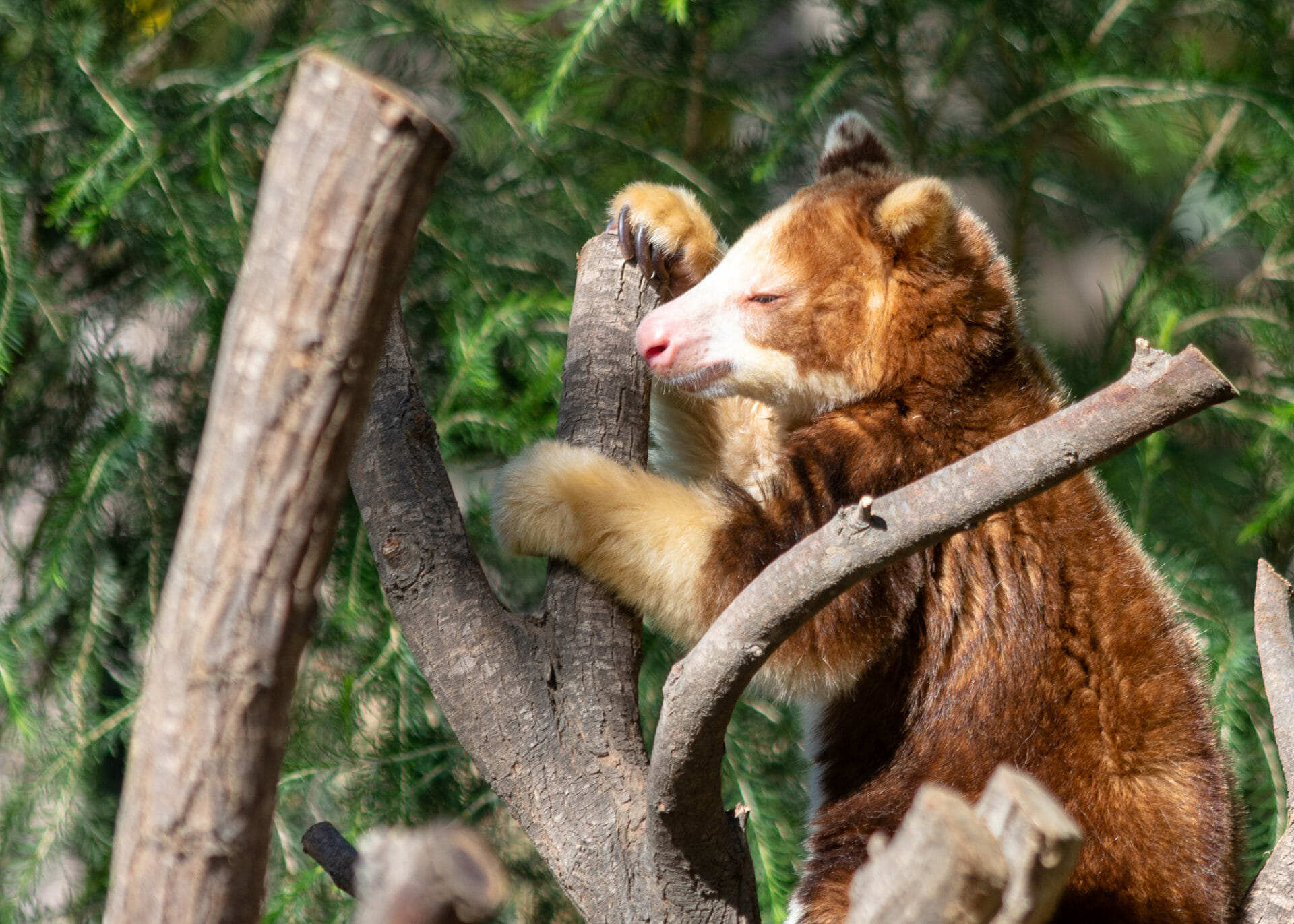 Totally adorable at the Australian Walkabout at San Diego Zoo's Safari Park